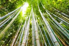 Bambou forrest Photos stock