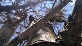 Bambou forrest Images libres de droits