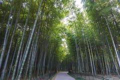 Bambou forrest image stock