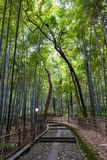 Bambou forrest photographie stock