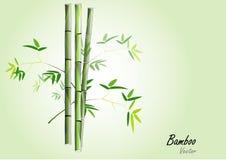 Bambou, illustration en bambou verte de vecteur sur le fond vert clair Photographie stock libre de droits