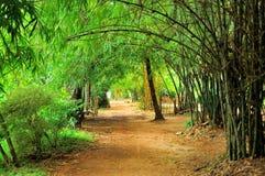 Bambou jaune en stationnement Photo libre de droits
