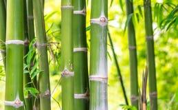 Bambou pour le fond Image libre de droits