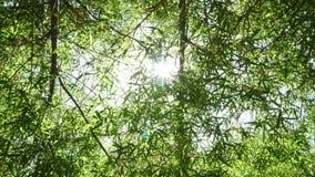Bambou photo libre de droits