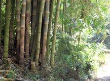 Bambou s'élevant dans Bali Photographie stock