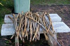 Bambou sec Image libre de droits
