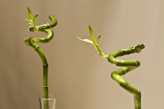 Bambou sur le miroir Images libres de droits