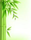 Bambou vert Photographie stock libre de droits