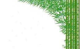 Bambou vert Photographie stock