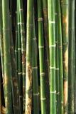 Bambou vert Photo stock