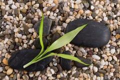 Bambou vert Images libres de droits