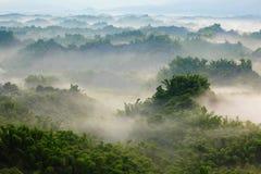 Bambou vert avec la mer du nuage le matin Images stock