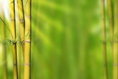 Bambou vert de tiges d'or et fond abstrait vert Photographie stock libre de droits