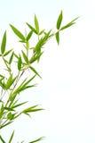 Bambou vert en été Photographie stock
