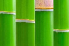 Bambou vert frais Photos stock