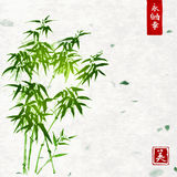 Bambou vert sur le fond fait main de papier de riz illustration libre de droits