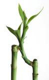 Bambous Photographie stock libre de droits