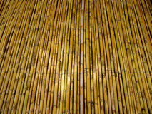 bambous Photo stock