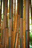 Bambouseraie, Anduze, France Photographie stock libre de droits