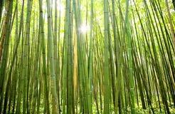 Bambouseraie, Anduze, Frankrijk Royalty-vrije Stock Afbeeldingen