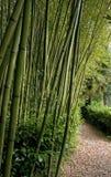 bambu森林 库存图片