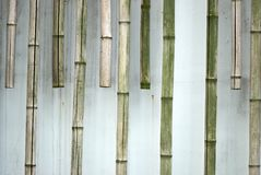 Bambu Foto de Stock Royalty Free