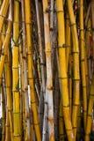 Bambu. Imagem de Stock Royalty Free