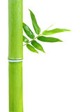 Bambu fotos de stock