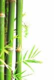 bambu Arkivfoton