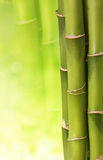 Bambu Foto de Stock Royalty Free
