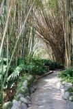 Bambu Imagens de Stock Royalty Free