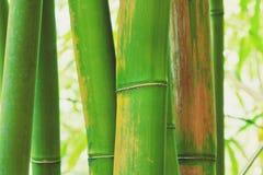 Bambu abstrato do zen Fotografia de Stock
