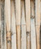 Bambu av modelldesignen Arkivbilder
