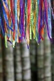 Bambu brasileiro colorido Forest Jungle das fitas do desejo do carnaval imagens de stock