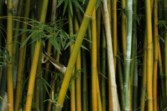 Bambu cruzado Foto de Stock Royalty Free