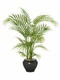 Bambu da conversão de Fernleaf, Imagem de Stock Royalty Free
