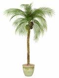 Bambu da conversão de Fernleaf, Fotografia de Stock Royalty Free