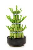 Bambu da sorte imagens de stock