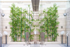 bambu dess spegel royaltyfri fotografi