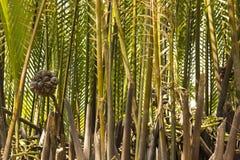Bambu do Riverbank fotos de stock