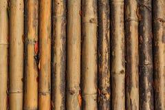 Bambu do vintage Fotografia de Stock
