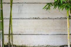 Bambu e parede verdes Imagem de Stock