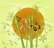 Bambu e Sun Imagens de Stock