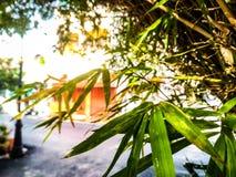 Bambu, folhas de bambu, bambu, árvores, verde, fundo Fotografia de Stock