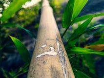 Bambu, folhas de bambu, bambu, árvores, verde, fundo Imagem de Stock Royalty Free
