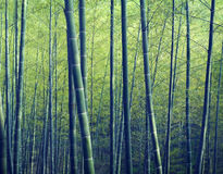 Bambu Forest Trees Nature Concept Arkivfoton