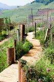 bambu gjorde walkwayen Royaltyfri Bild
