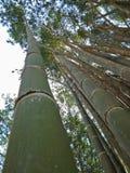 Bambu i skogen Royaltyfri Bild