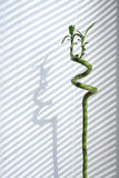 bambu inomhus Royaltyfri Fotografi