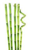 Bambu isolado no branco fotografia de stock